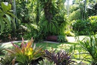 Cairns-Botanic-Garden-4