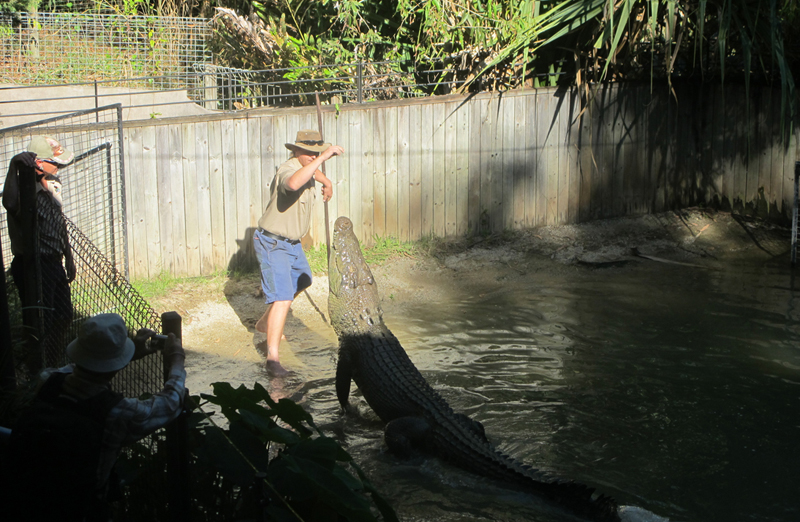 Croc Attack - Artleys- Crocodile Adventures