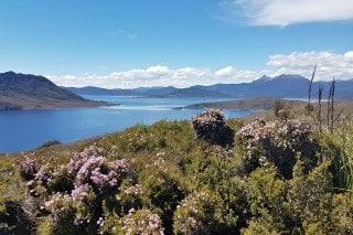 tasmanie-pedder-lake