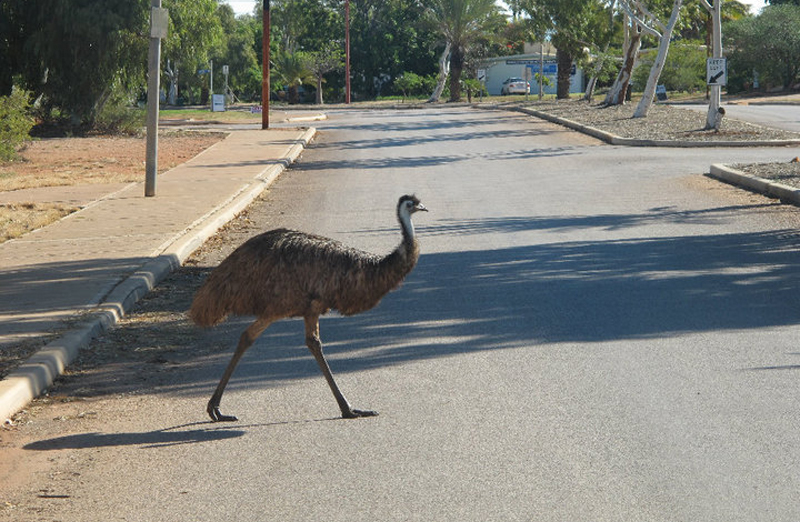 Emu Crossing
