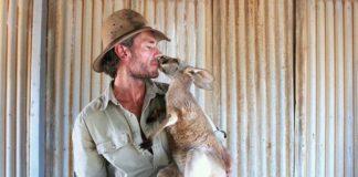 Kangaroo Dundee sauveteur kangourou