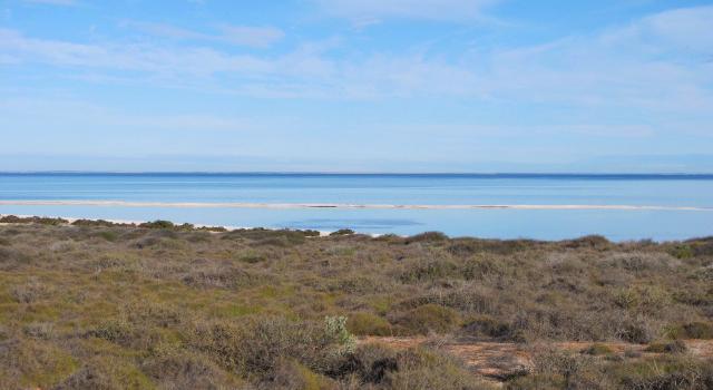 Dauphins Monkey Mia Shark Bay Australie Australia