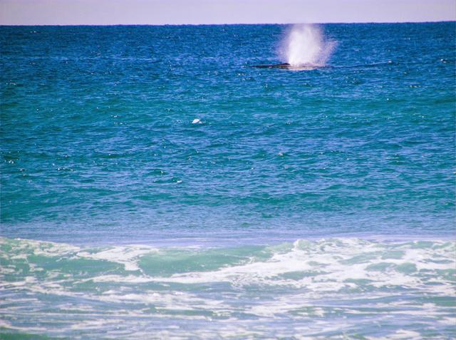 Fraser Island whale Australia