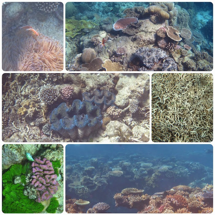 barriere corail
