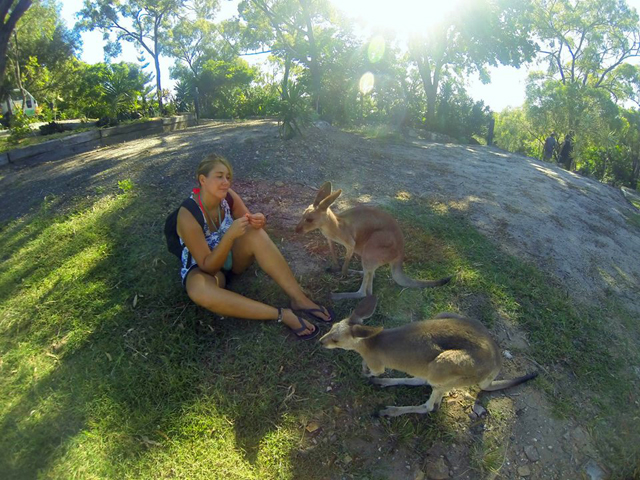 job animaux australie