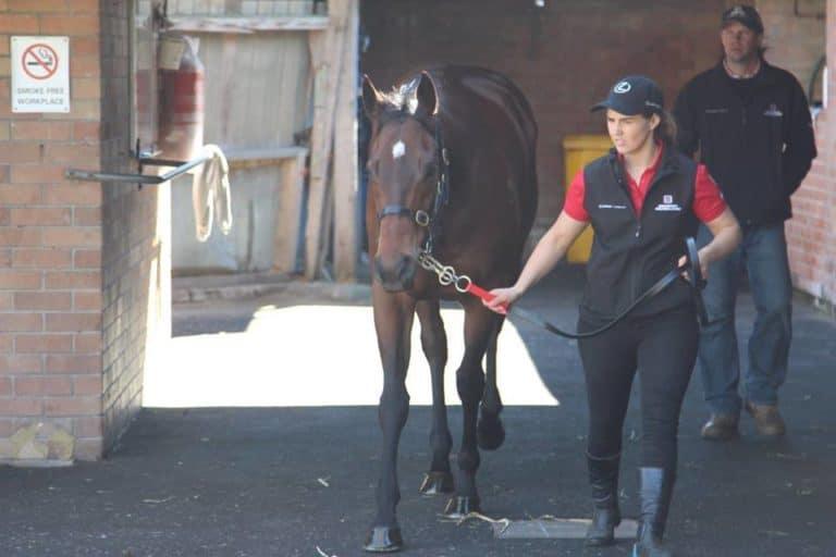 Travailler dans une écurie de chevaux de courses en Australie