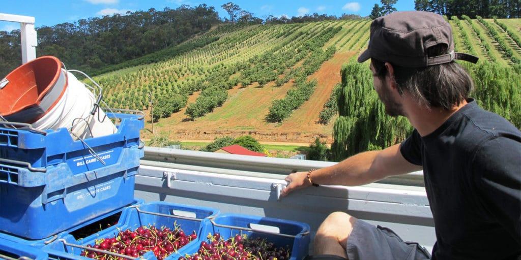 fruit picking australie fairwork et vos droits