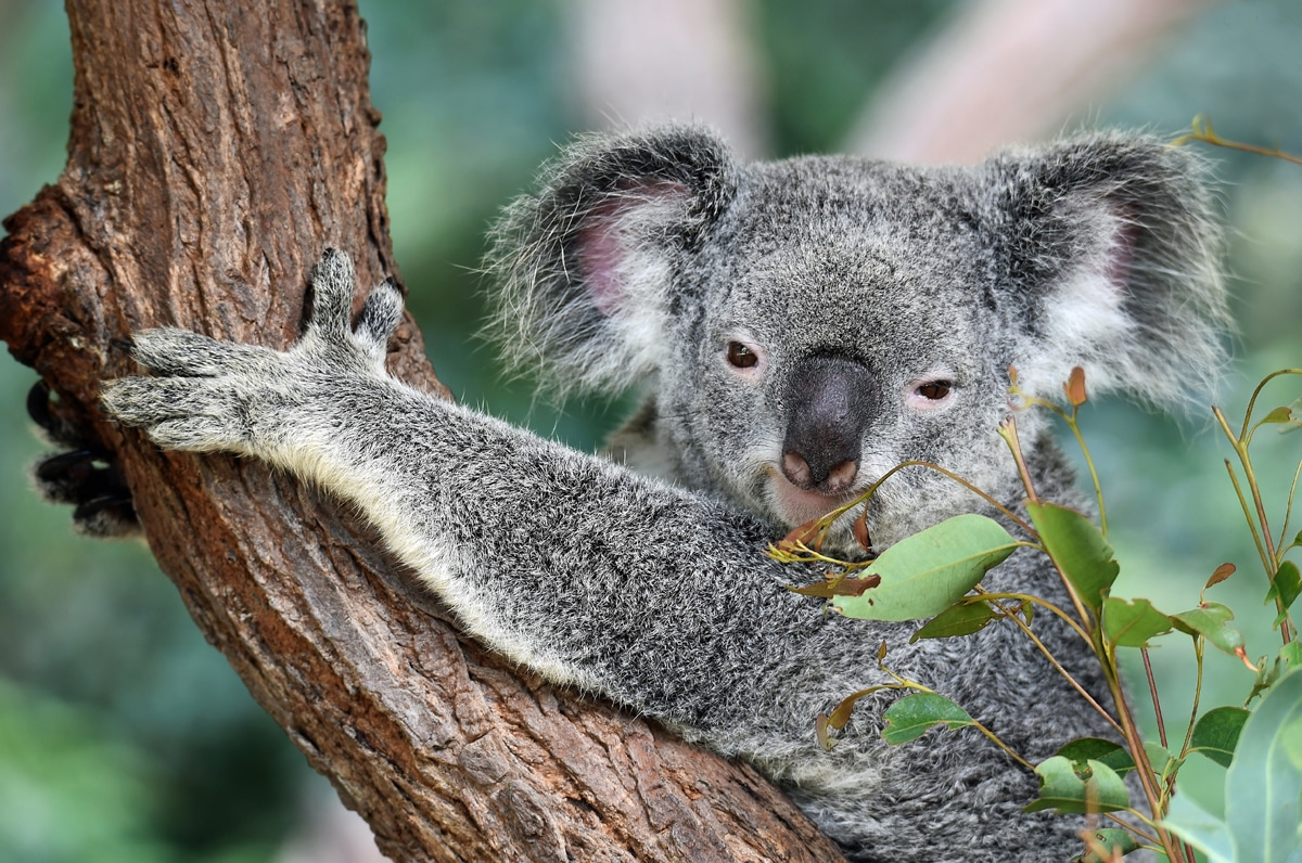 Côte Est Australie - Port Macquarie