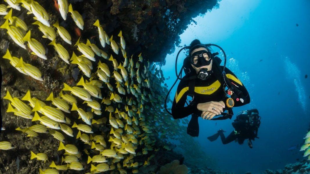 Passer son diplôme de plongée en Australie