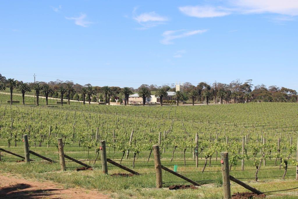 Vignes Barossa Valley - Adélaïde