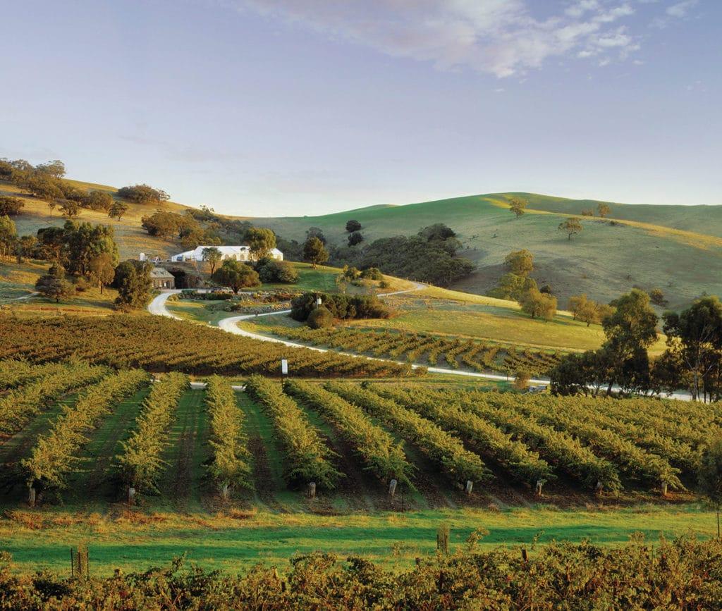 vignobles barossa valley point de vue randonnées lookouts