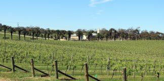 Visiter Barossa Valley - Adélaïde - Australie