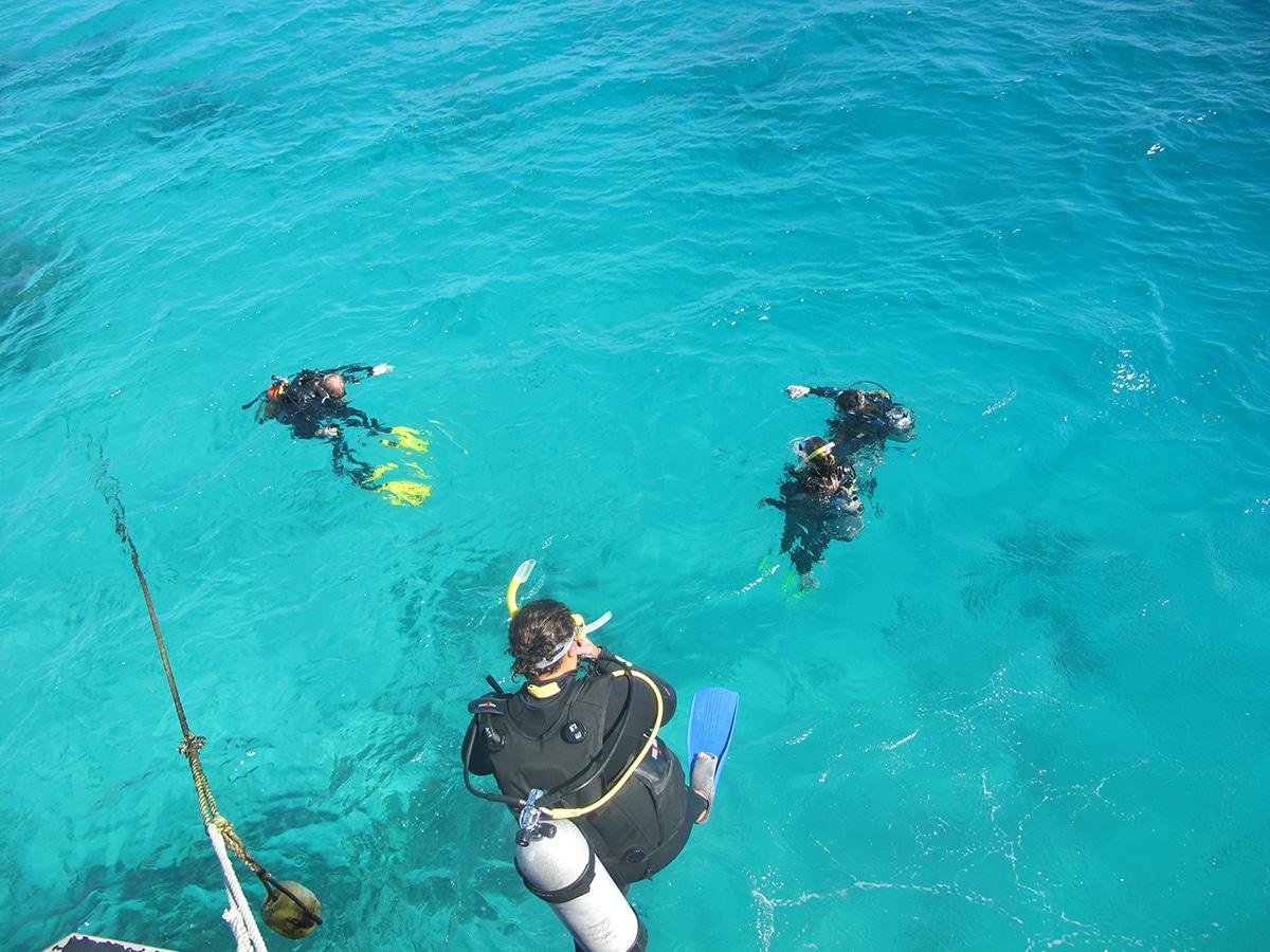 Grande barrière de corail excursions plongée australie