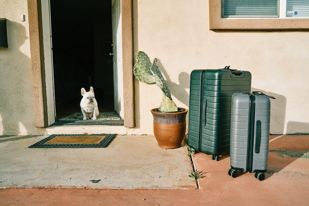 les animaux de compagnie douanes en australie