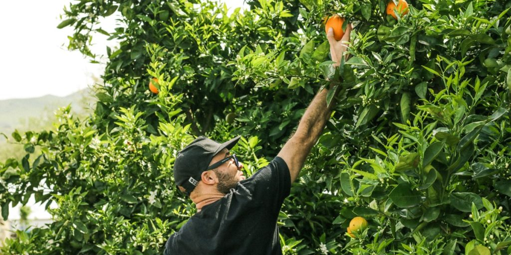 bons plans australie fruit picking