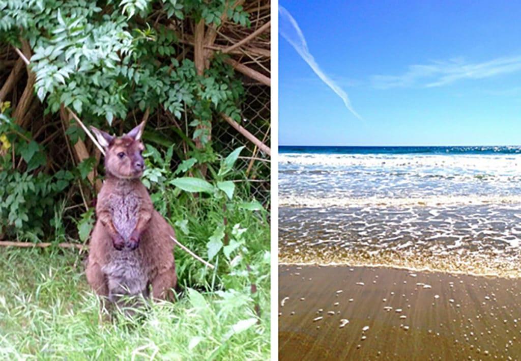 Woofing kangaroo island 5 expérience australie