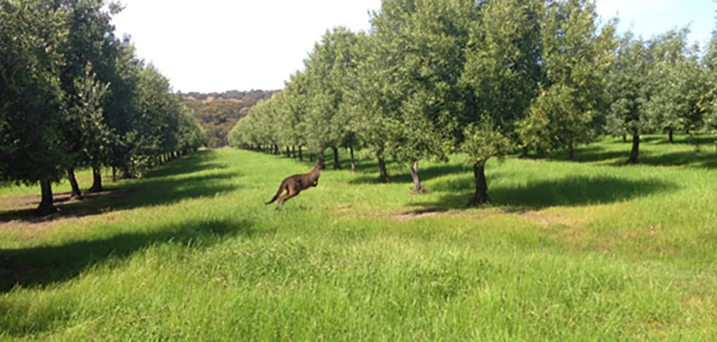 Woofing kangaroo island 4 expérience australie