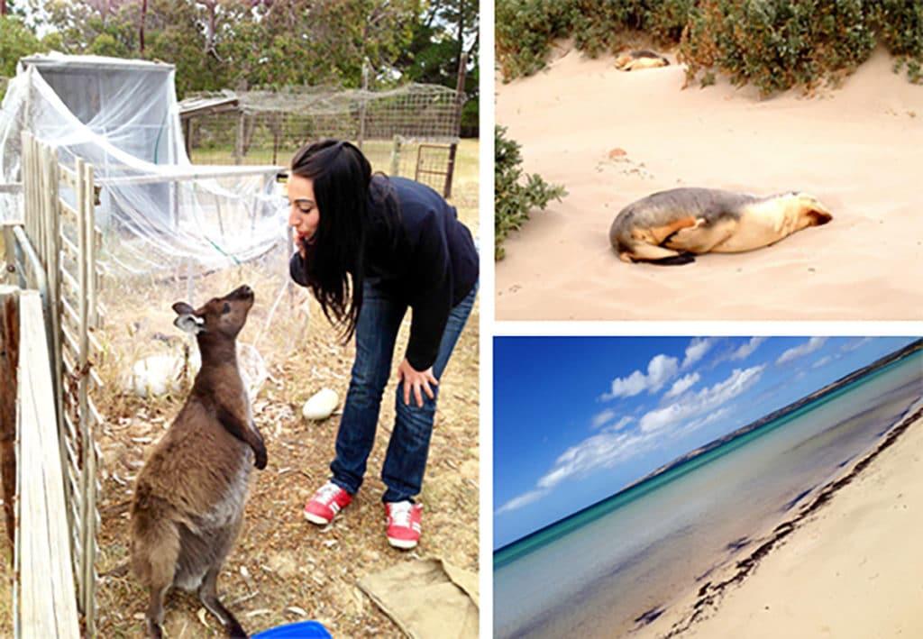 Woofing kangaroo island expérience australie2