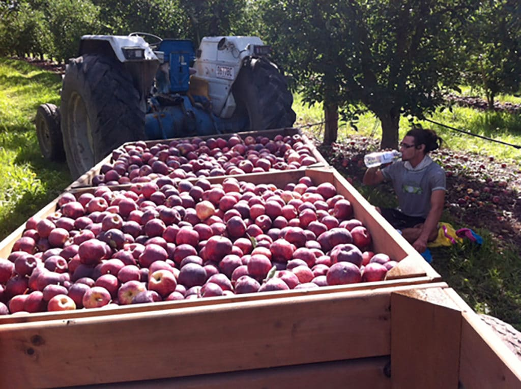 Apple picking Pommes Australie Queensland