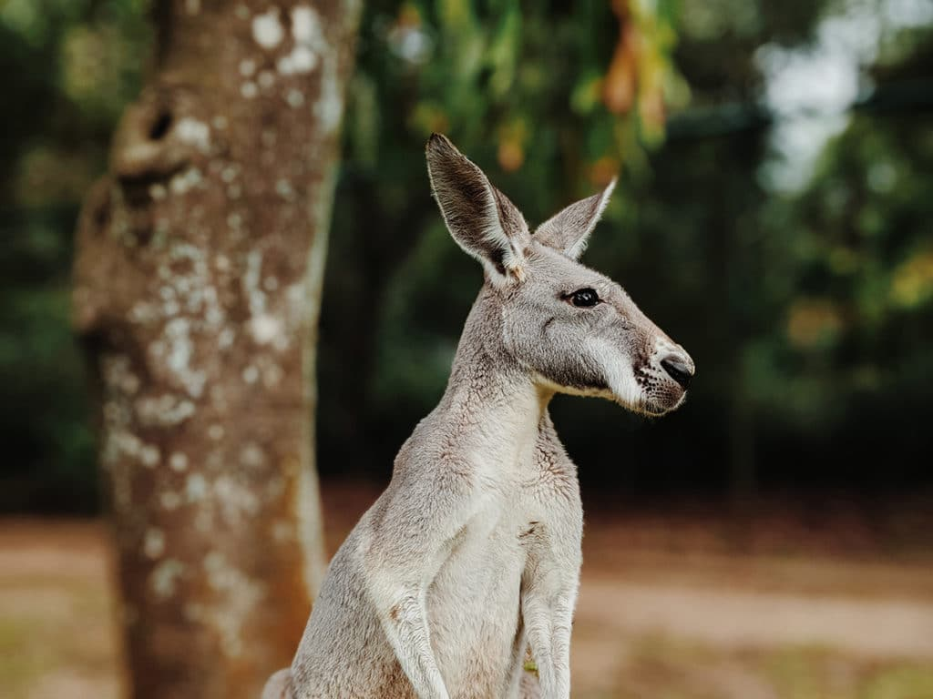 sunshine coast australia zoo