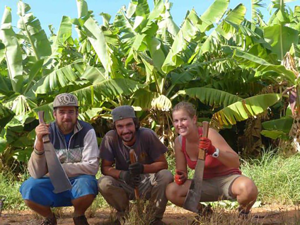 fruit picking à carnarvon